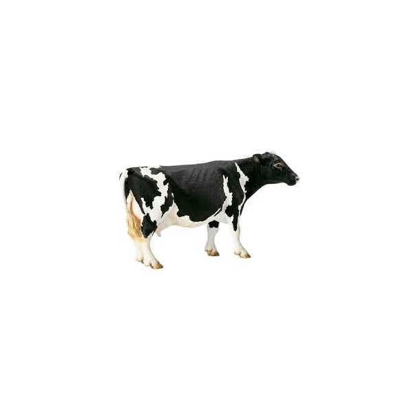 lak og læder hvid ko